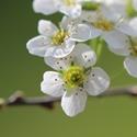 Miniblütchen