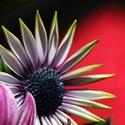 Blüte Ausschnitt