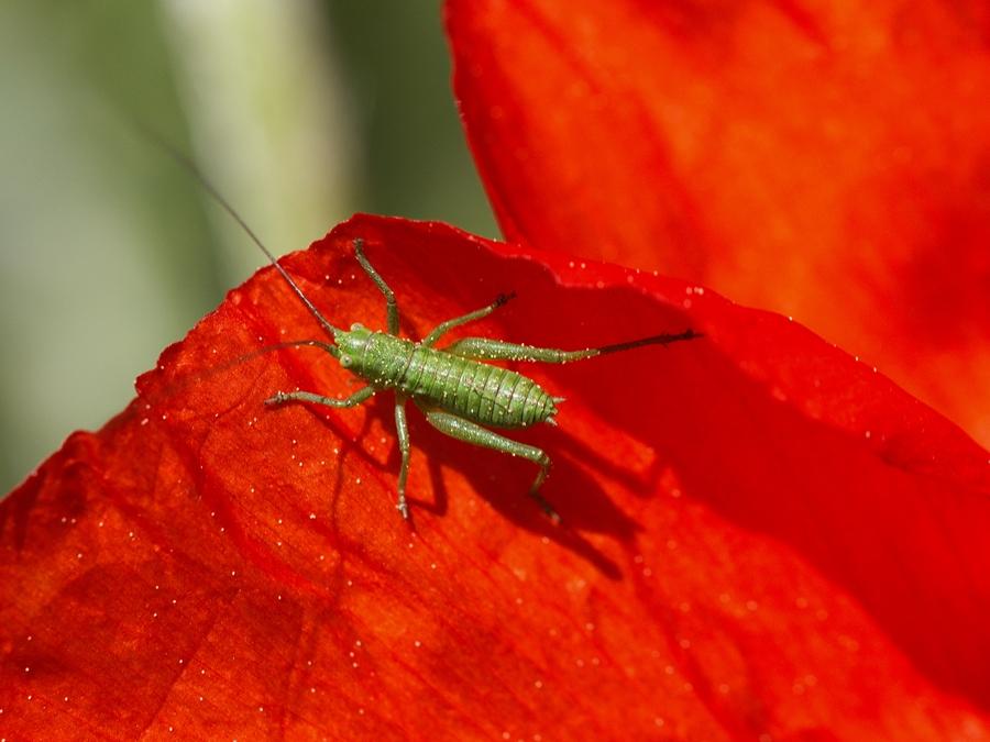 Insekt 1204