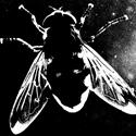 Fliege 4698